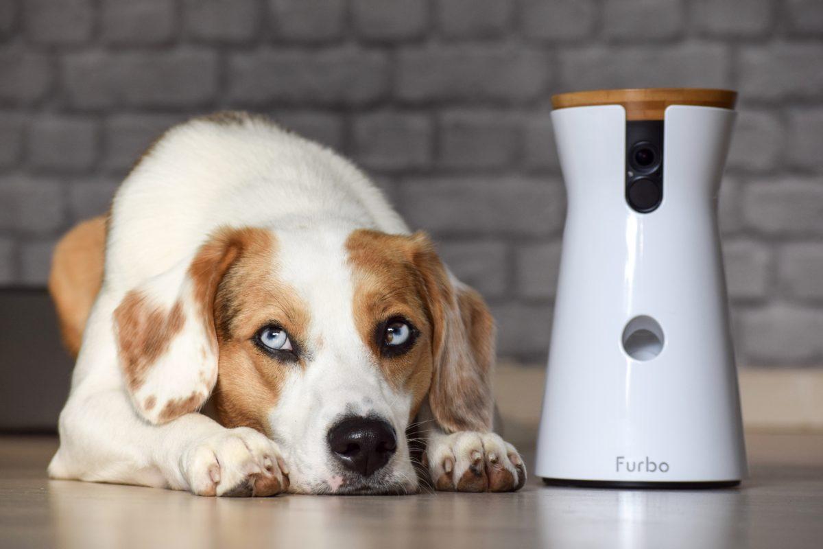 Review mit Blue – Die Furbo Hundekamera