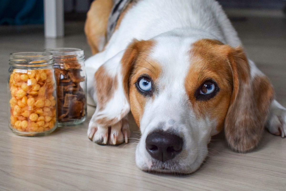 Leckere Hundekekse – Ganz einfach selbst gebacken!