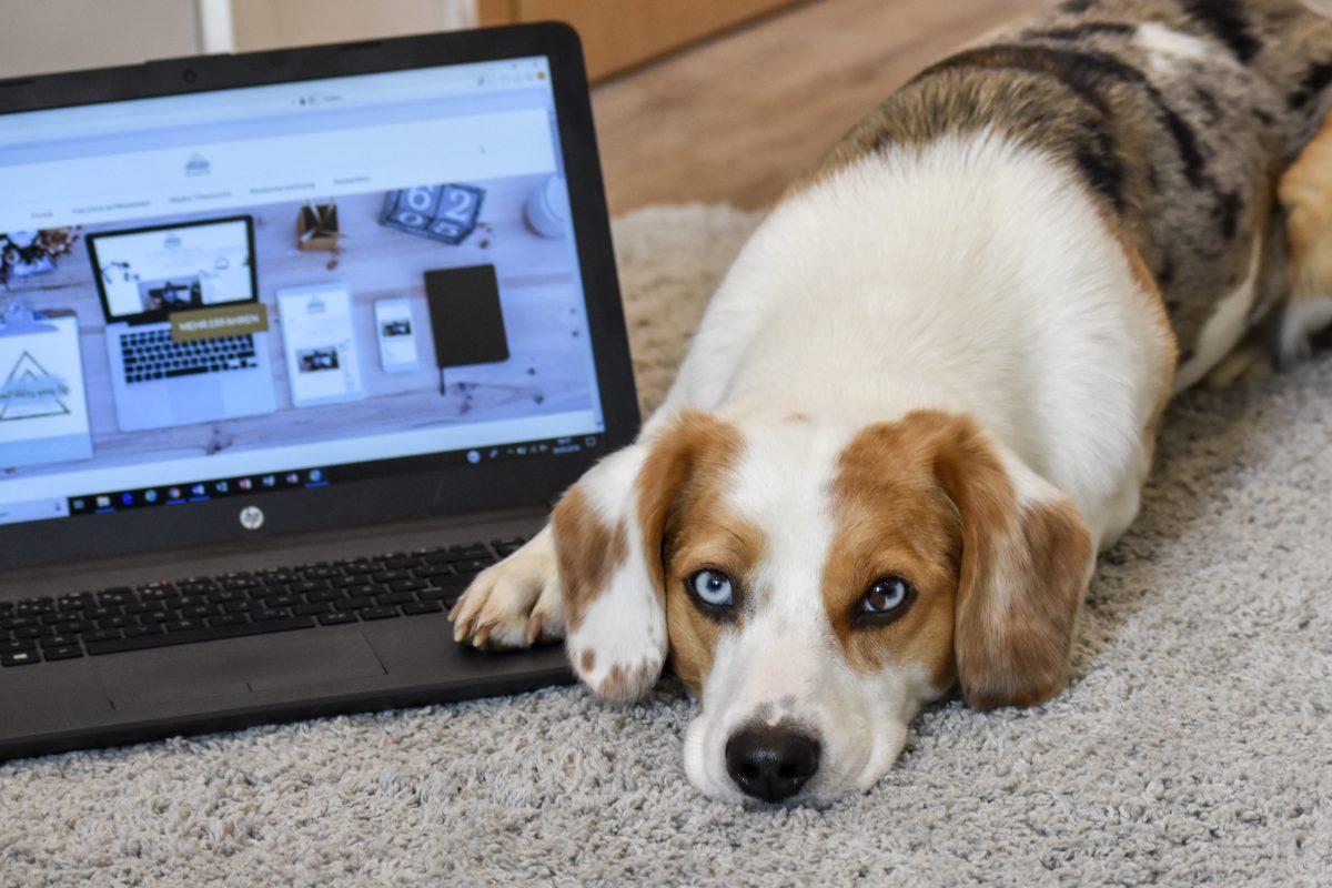 """Review mit Blue – Wie der Online-Hunde-Kurs """"EmPAWer your life"""" unser Zusammenleben veränderte"""